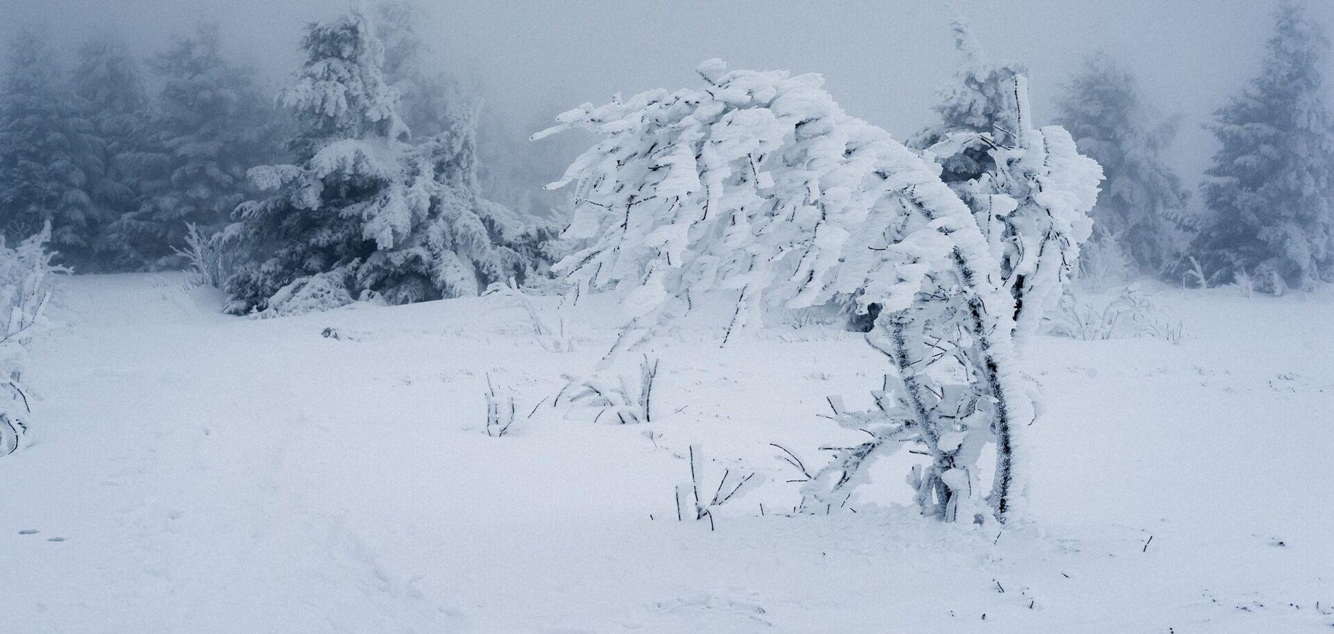 Снігопад у лісі