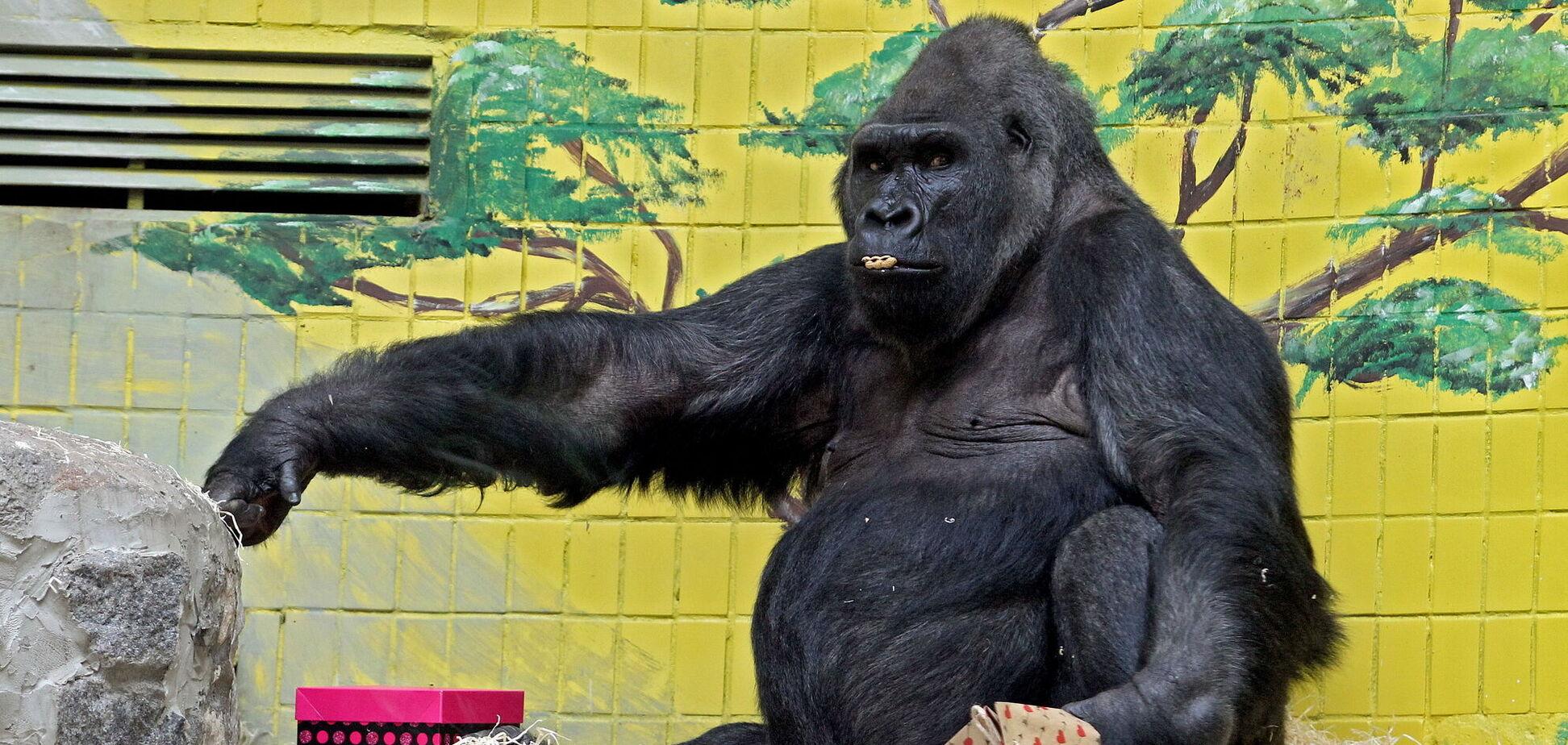 Примат находится под постоянным наблюдением специалистов