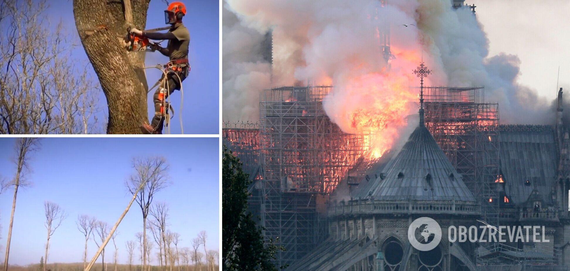 Во Франции срезали 200-летние дубы для сгоревшего собора Парижской Богоматери. Фото и видео