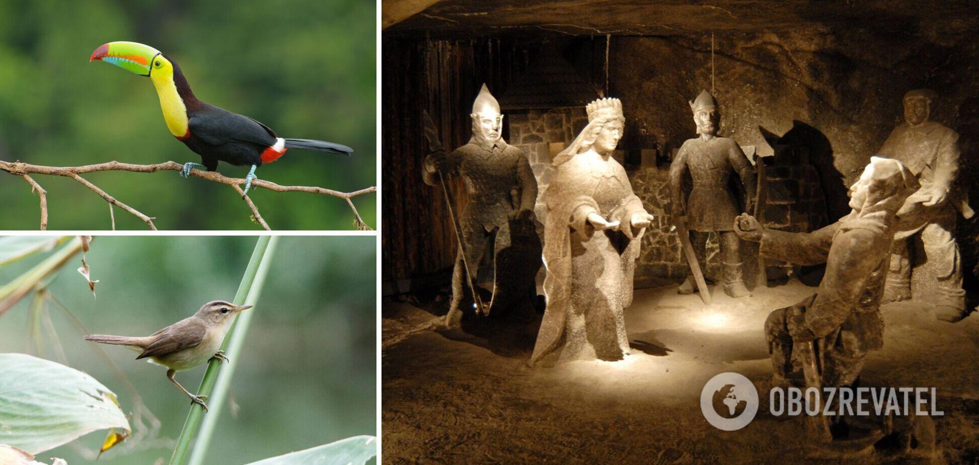 Містична соляна шахта, рідкісні тварини та інші цікаві факти