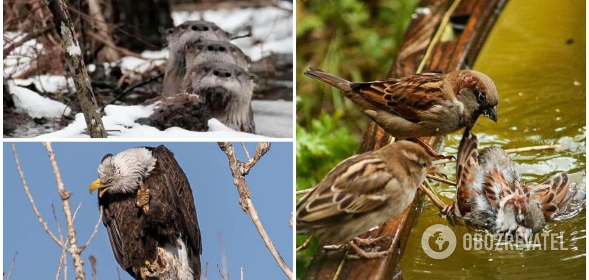 7 невдалих фото тварин, які довели мережу до сліз