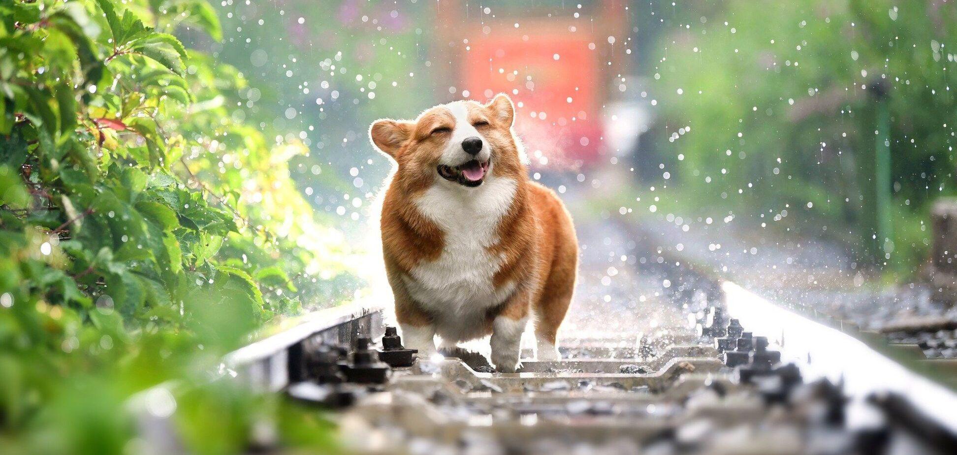 Собака спасалась от сильного ветра в Британии и бежала со скоростью 112 км/час