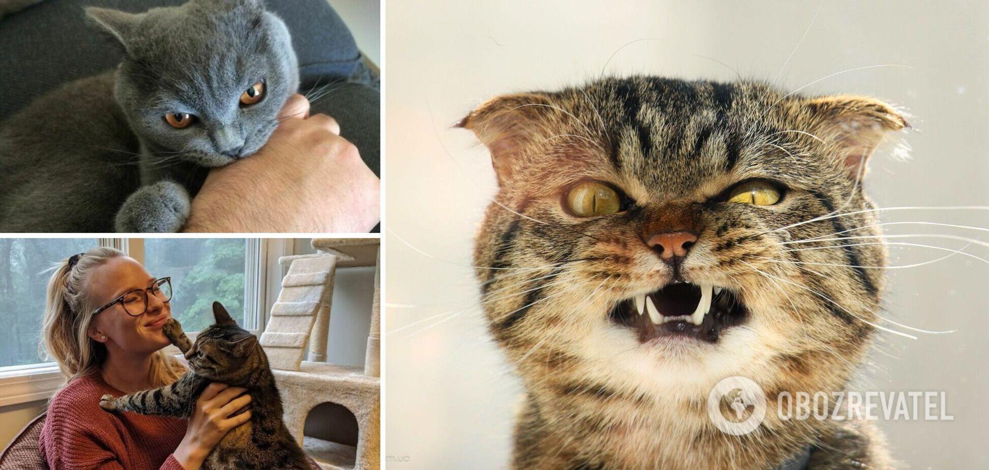 Коты – независимые животные