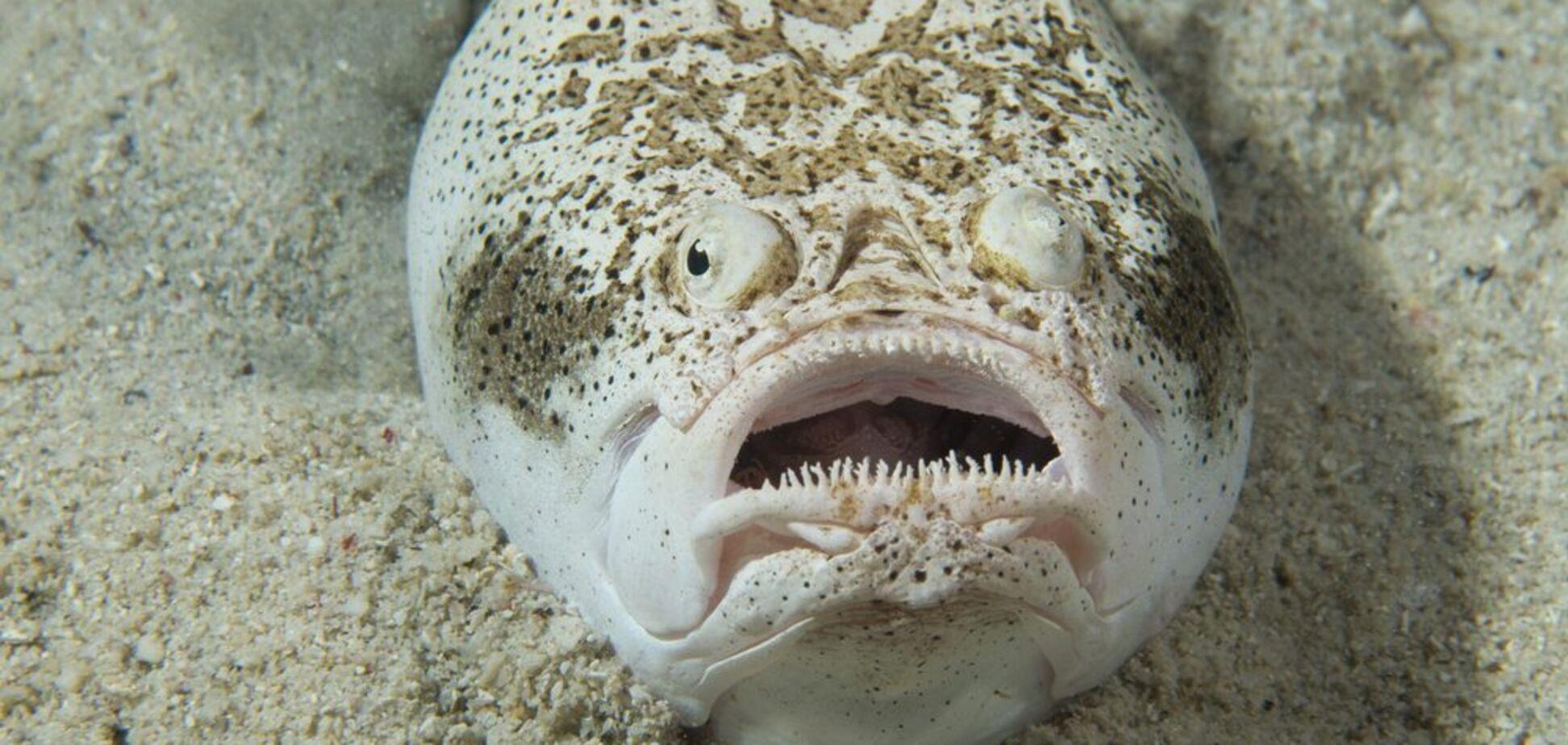 Зубастая рыба озадачила сеть