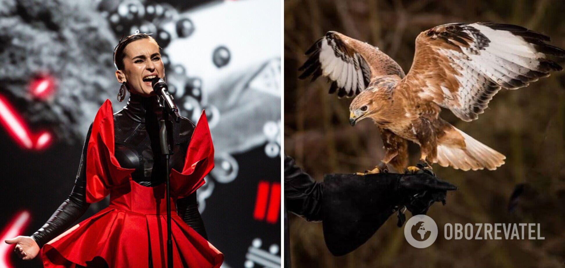 В группе Go_A опровергли эксплуатацию краснокнижной птицы на съемках клипа для 'Евровидения 2021'