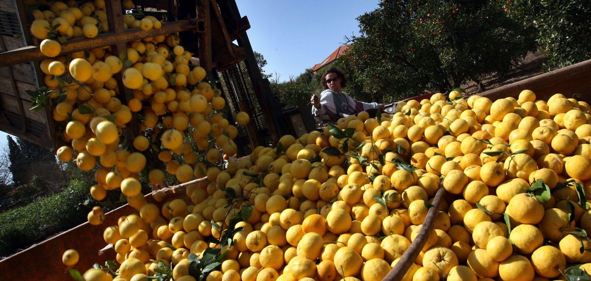 В Украину из Турции завезли фрукты с опасным пестицидом