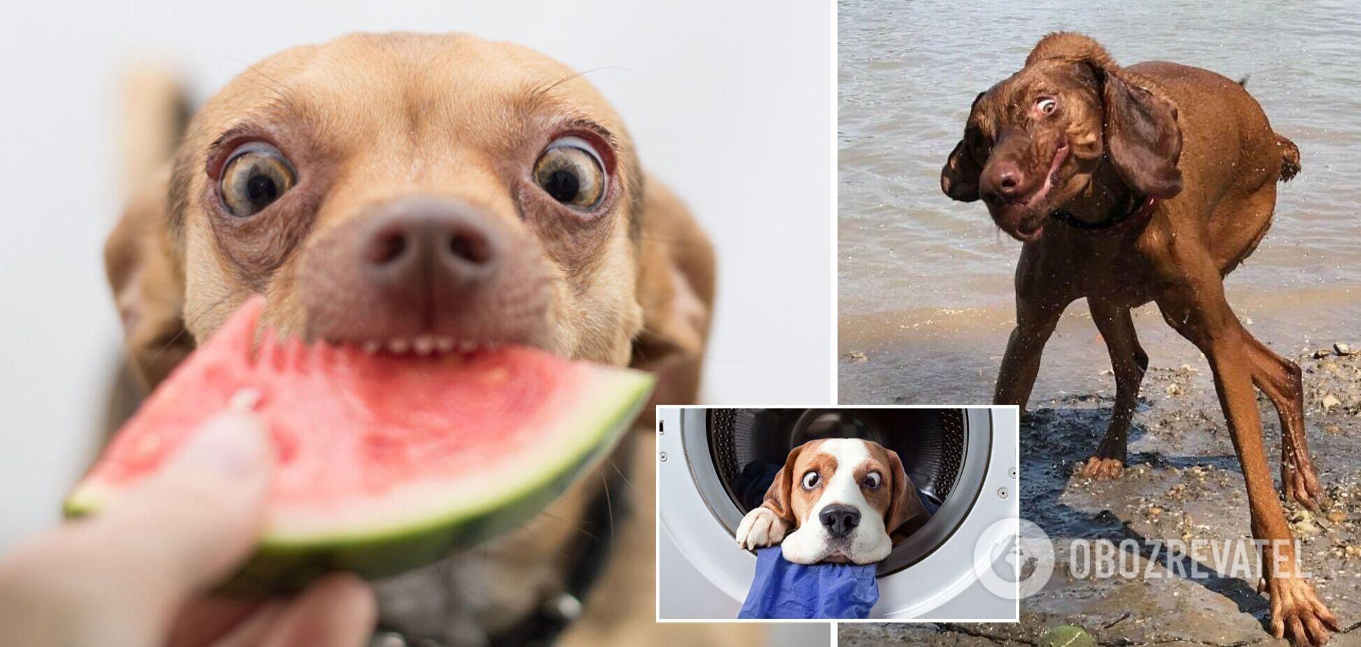 10 кумедних фото собак, які змусять сміятися кожного