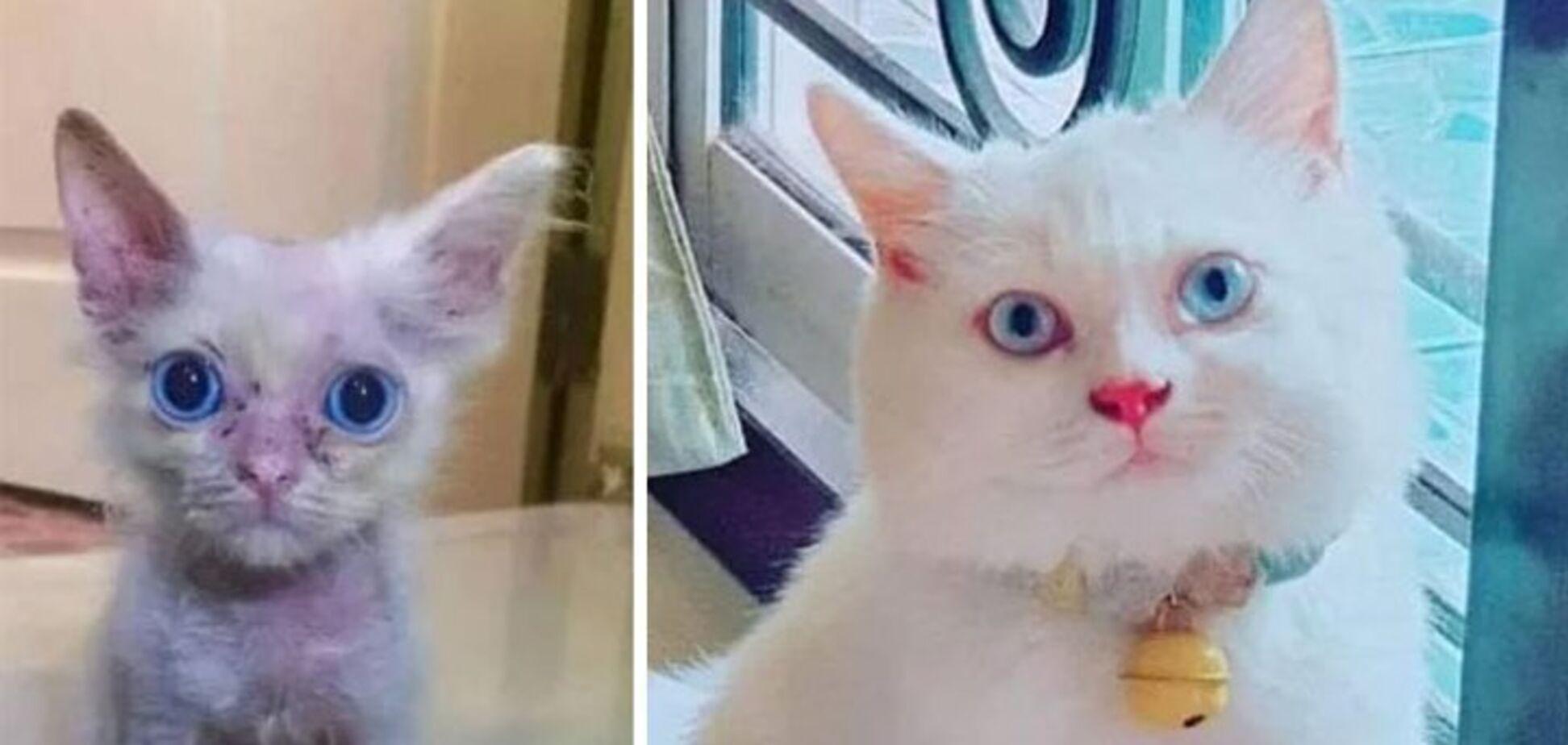 Хозяйка забрала кота из приюта.