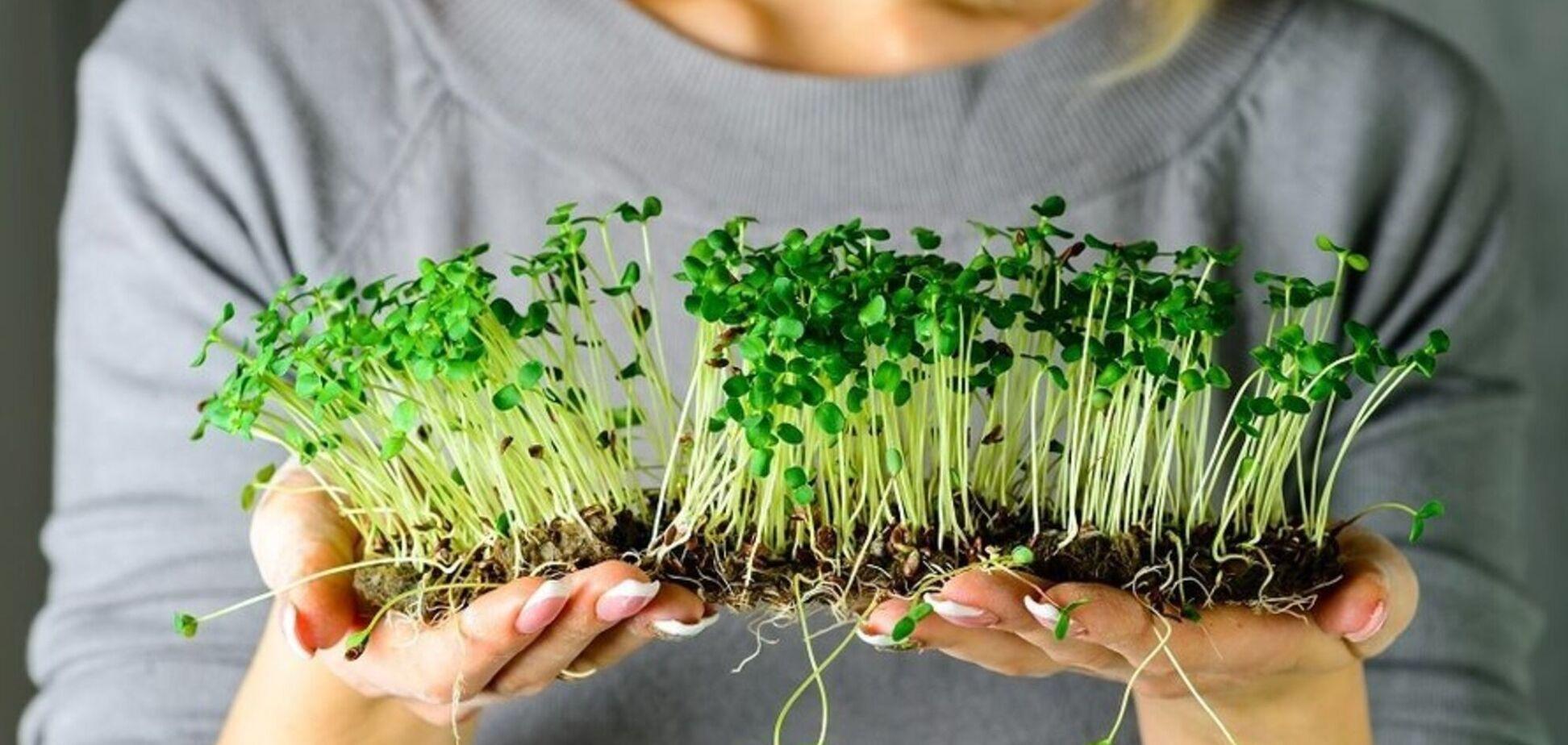 користь мікрозелені