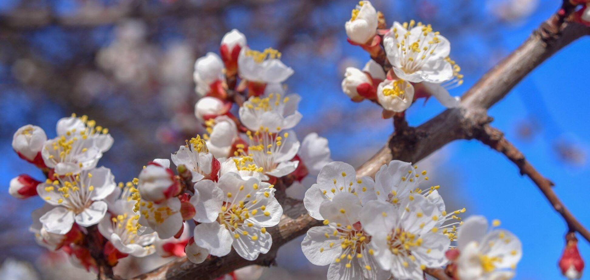 В Украину идет потепление: народный синоптик дал подробный прогноз на конец марта и начало апреля