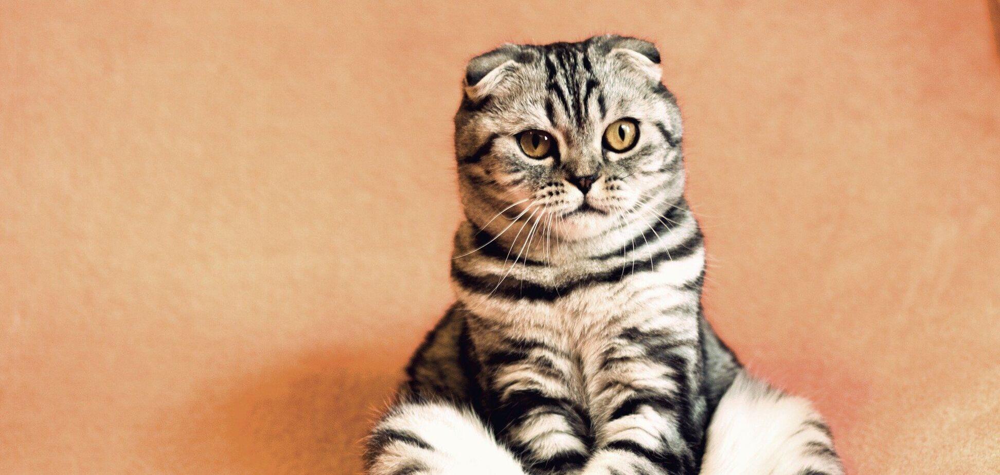 Кот с огромными клыками стал звездой