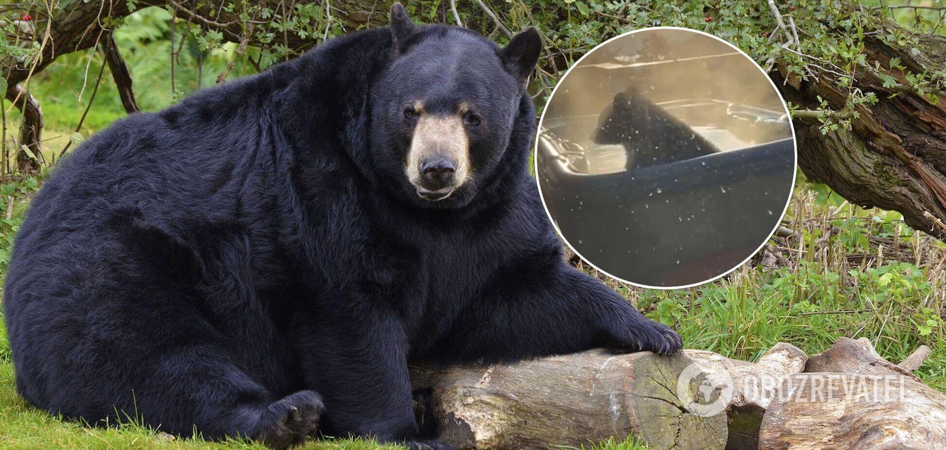 Медведь залез в джакузи погреться. Забавное видео