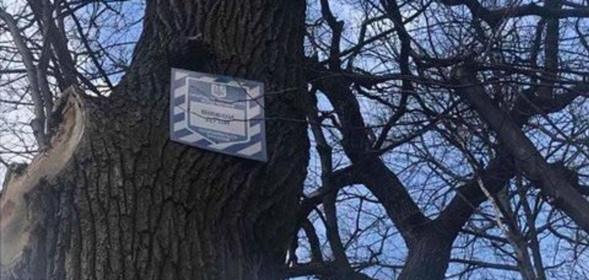 У Києві знищили столітні дуби в Голосіївському лісі – в Держекоінспекції відреагували. Фото