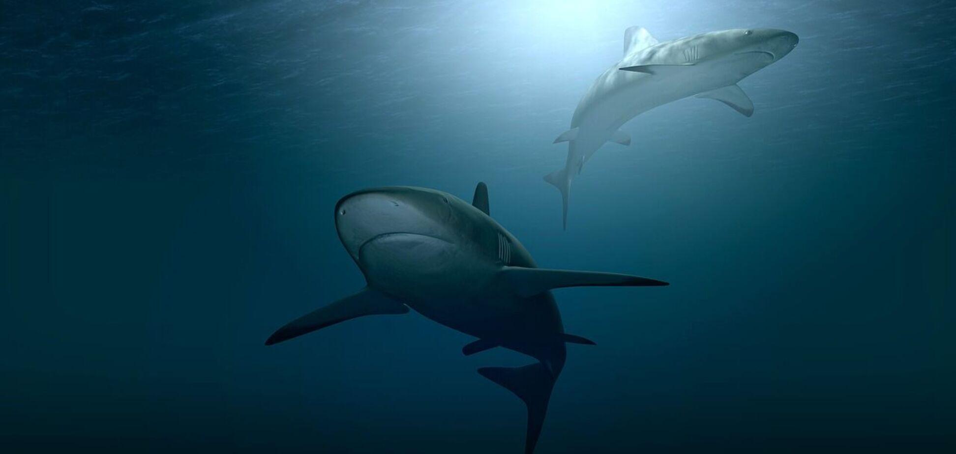 У Новій Зеландії виявили акул, що світяться, майже двометрової довжини. Фото