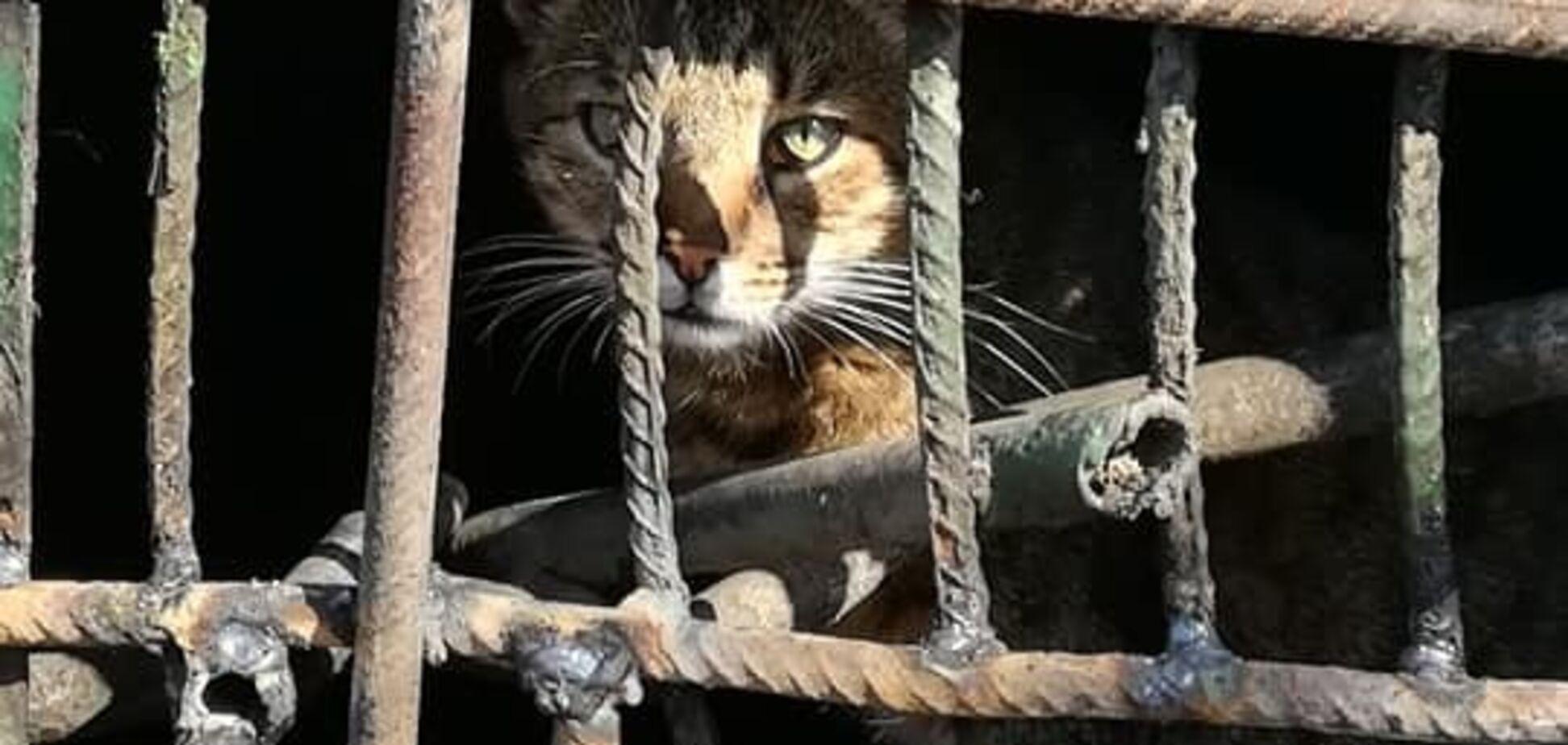 В Киеве живьем 'заварили' кошку с котятами в подвале многоэтажки