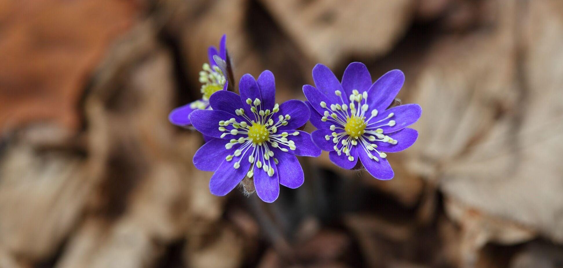 Цветение цветов весной