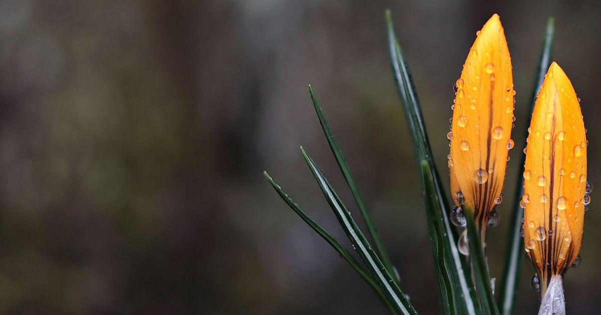 5 марта: праздник, приметы на День Катыша и именинники