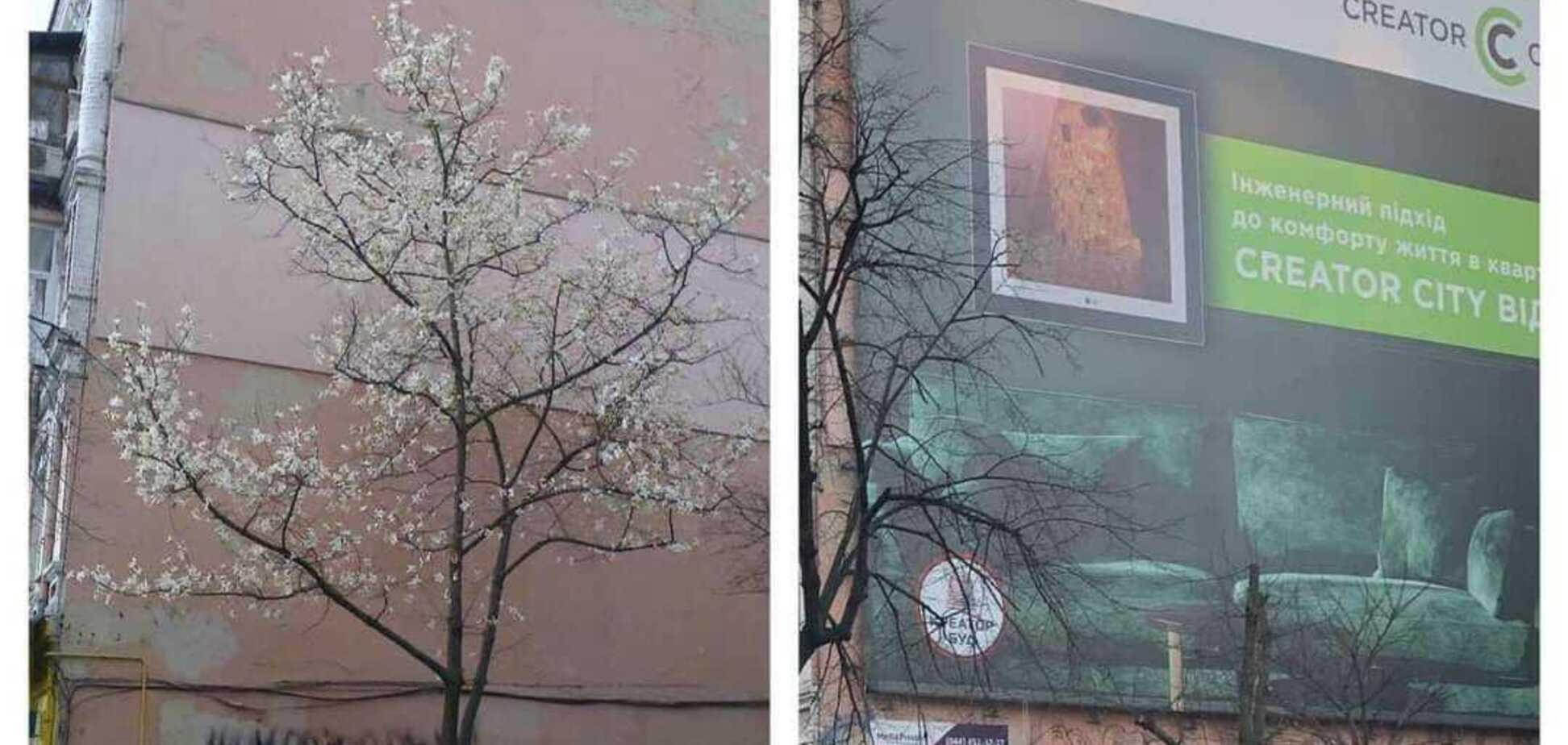 У центрі Києва заради рекламного банера обрізали рідкісне дерево: подробиці пригоди