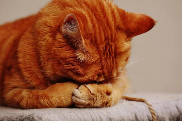Голова окремо від тулуба: нова ілюзія з кішкою налякала користувачів мережі. Фото