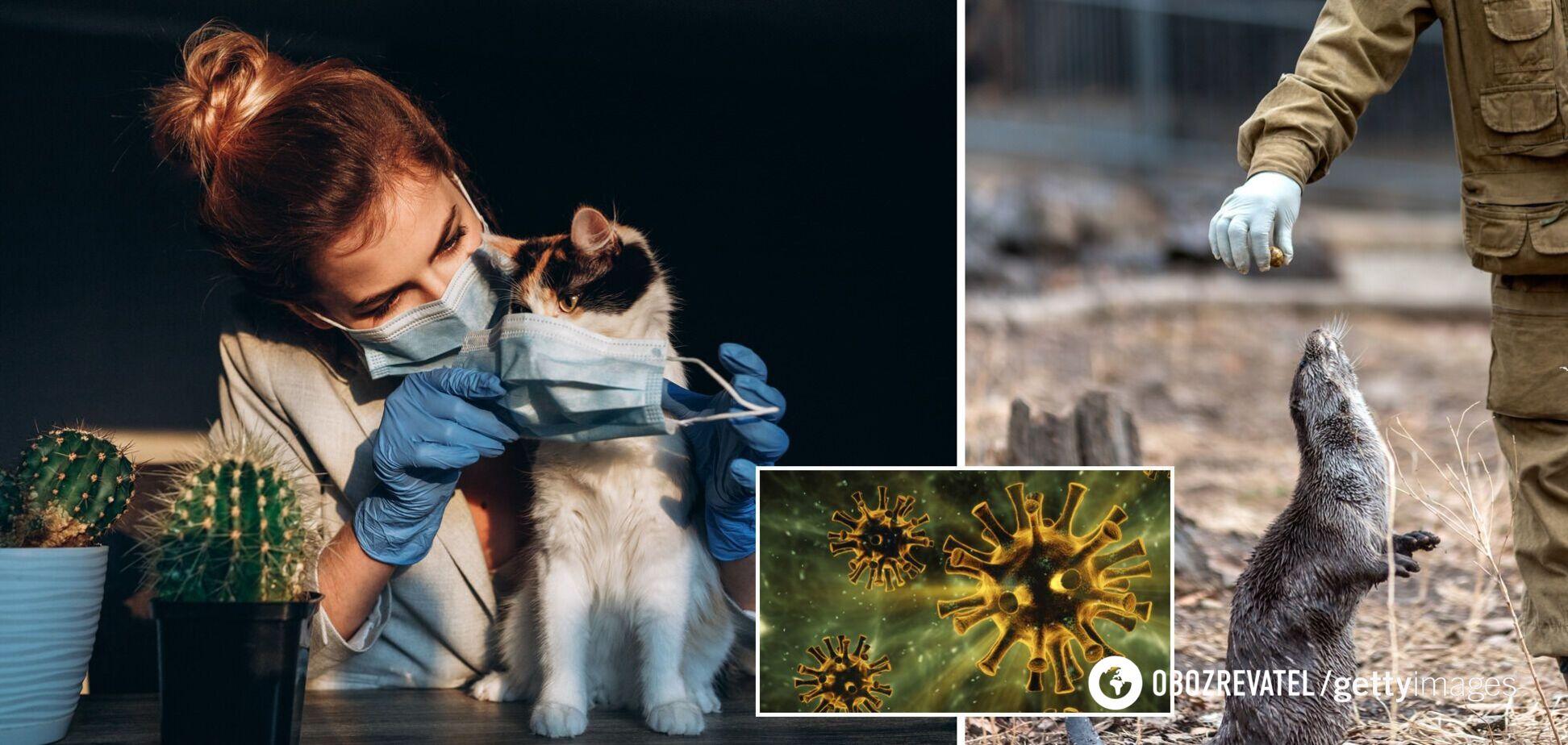 Коти, хом'яки й корови виявилися переносниками коронавірусу – вчені