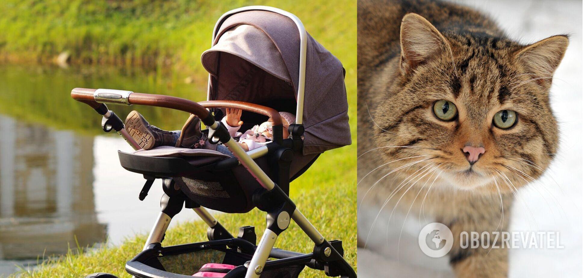 На Рівненщині немовля задихнулося через кота, який ліг йому на обличчя