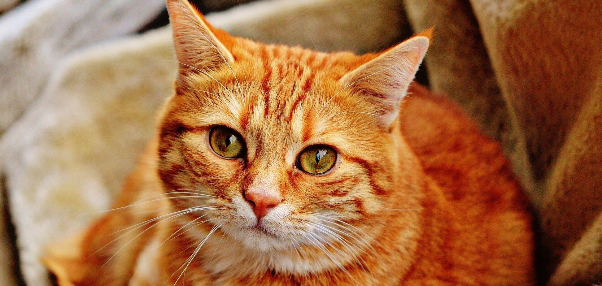 Вчені з'ясували, чому кішки починають різко носитися по будинку