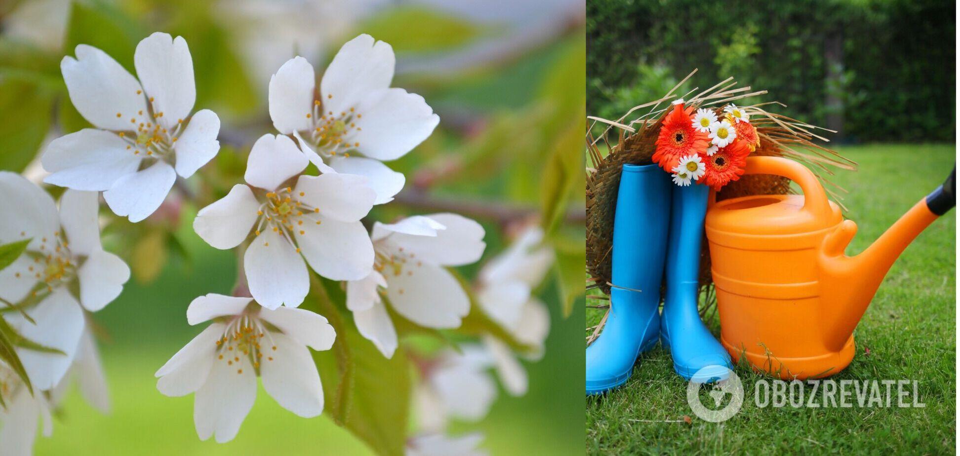 Посівний календар на травень 2021 року Україна