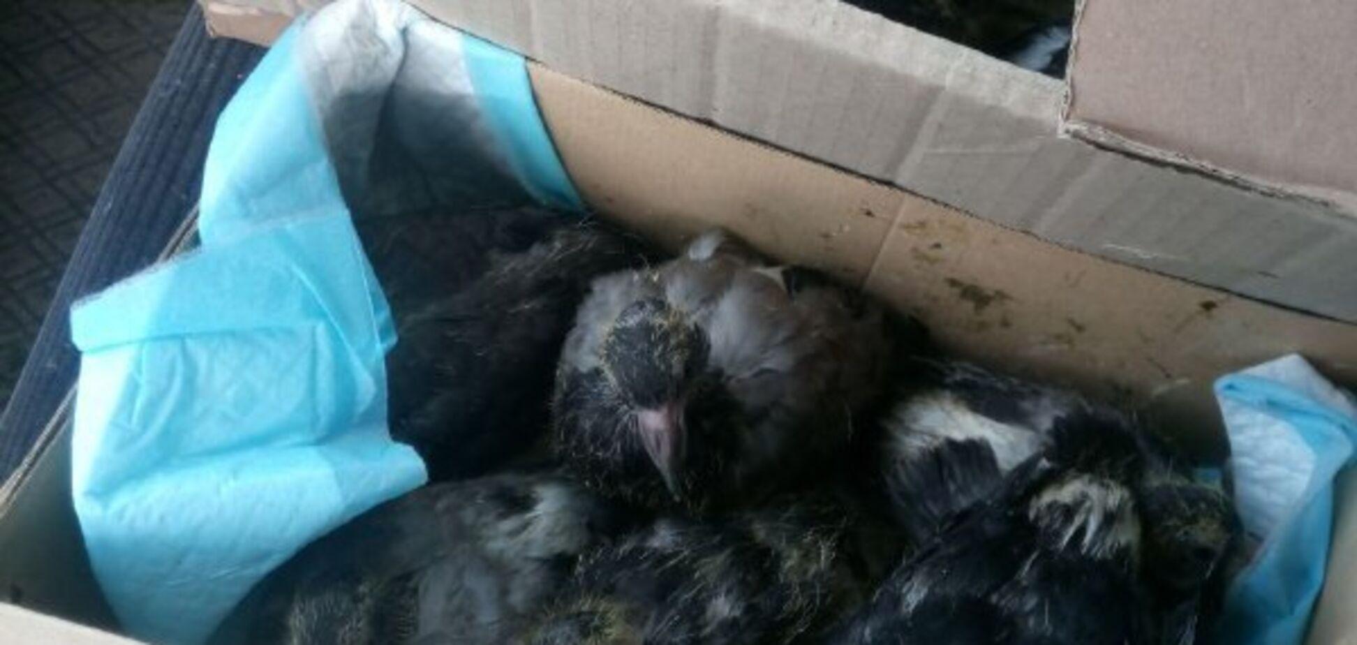 У Києві живцем замурували понад 50 голубів