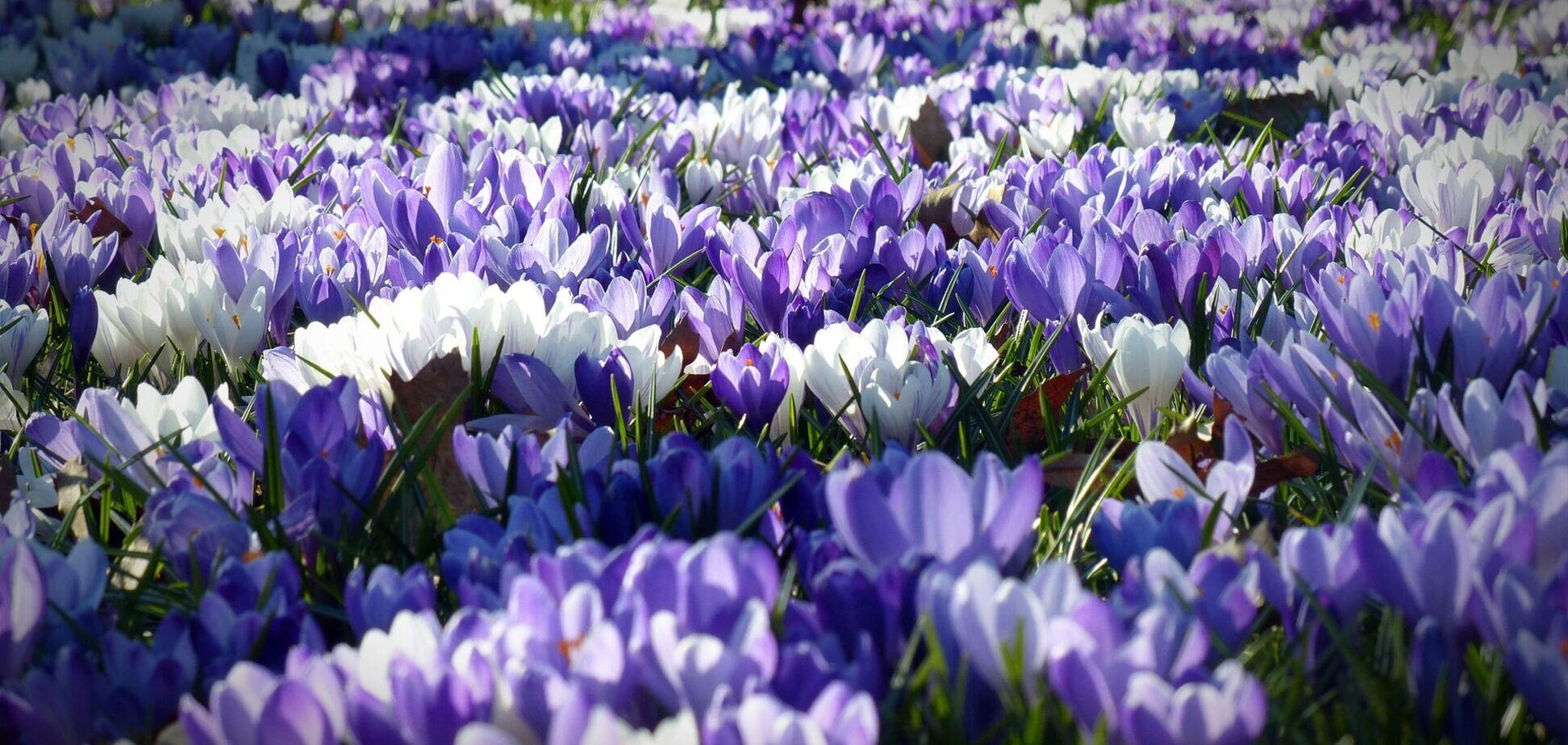14 квітня: свято, прикмети на Марію Порожні щі й іменники
