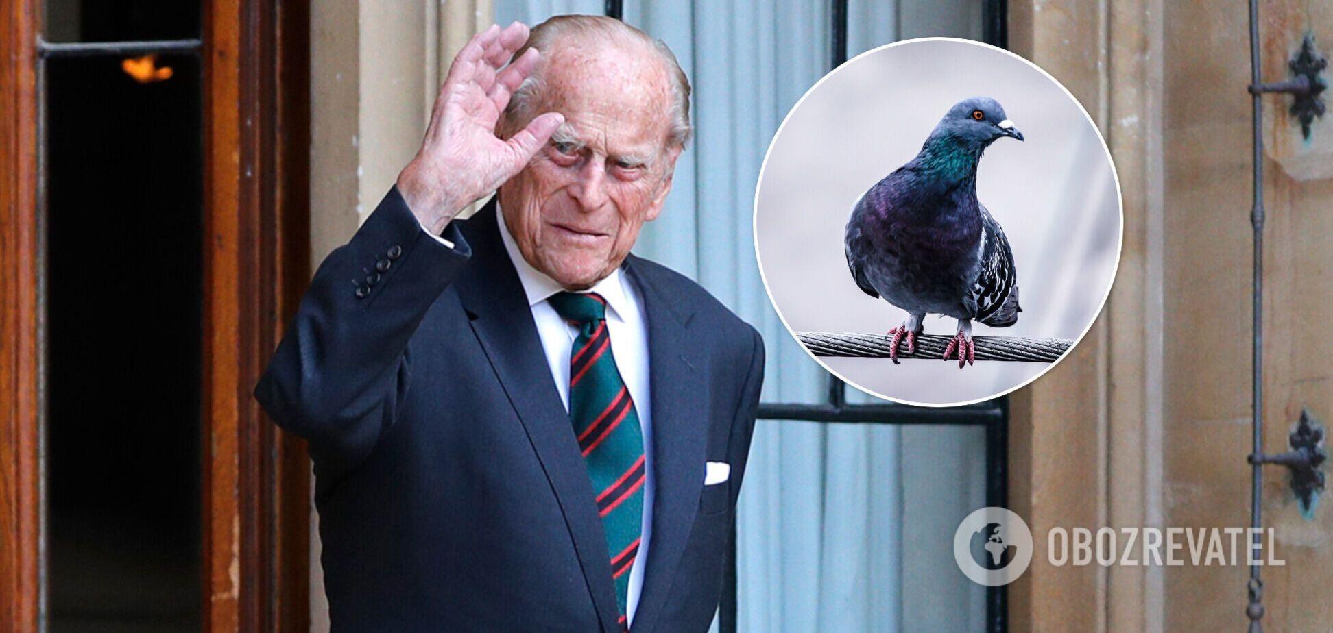 В память о принце Филиппе выпустят гоночных голубей