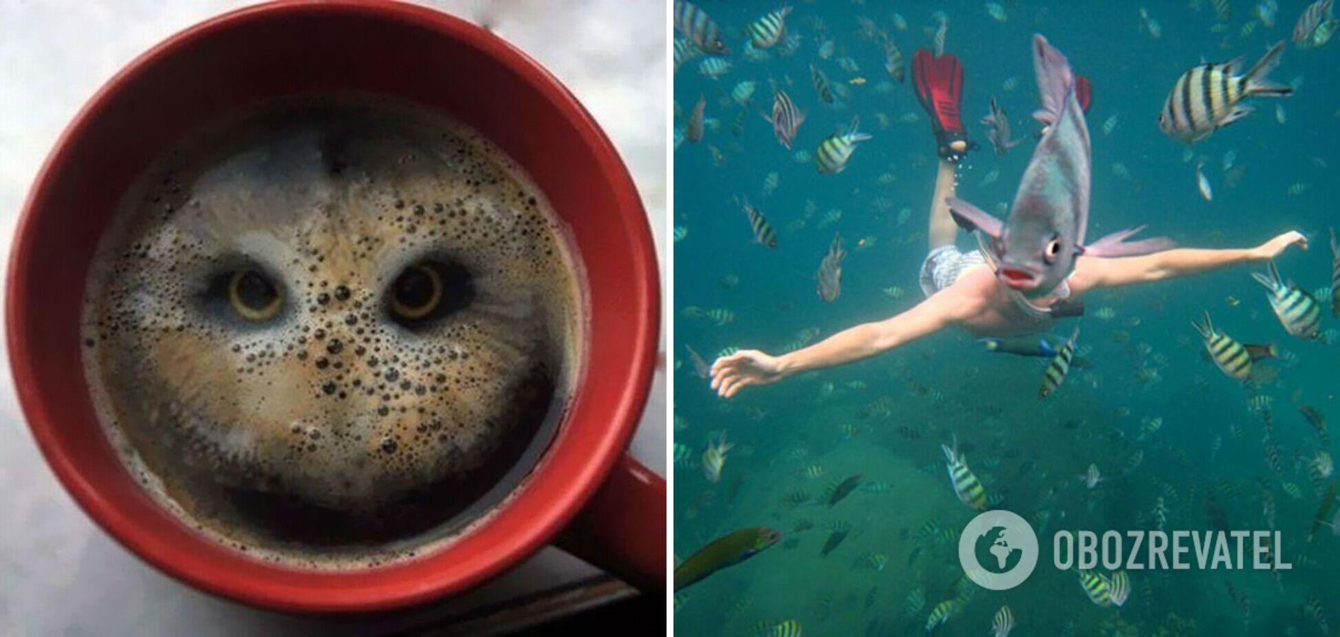 Пінка кави з портретом сови, дайвер-рибка і багато інших ілюзій