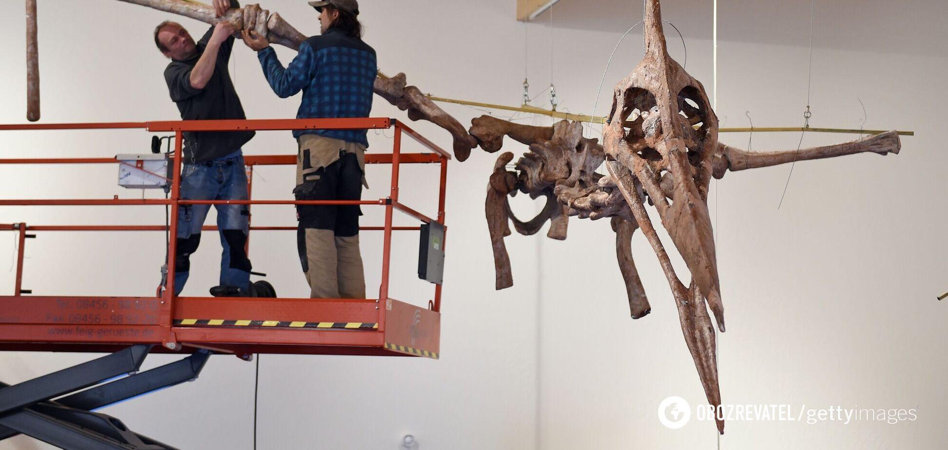 Раскрыт секрет прочности скелета летающих динозавров