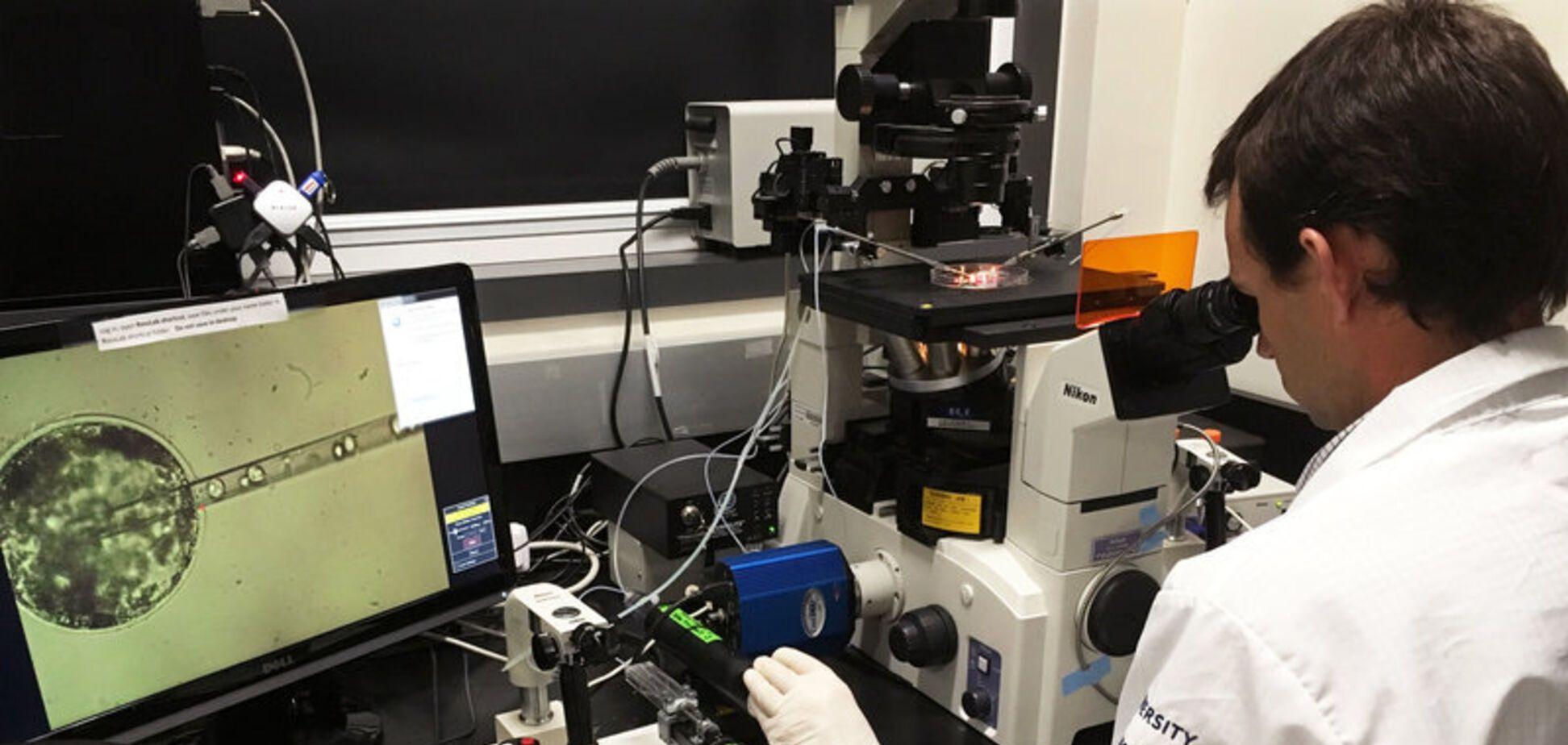 Вчені виростили людські клітини в ембріоні макаки