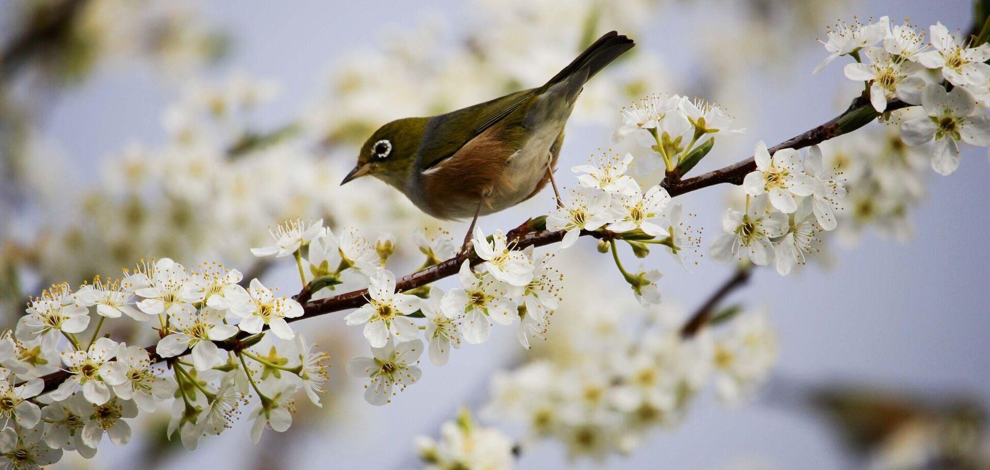 17 квітня: свята, прикмети й іменинники