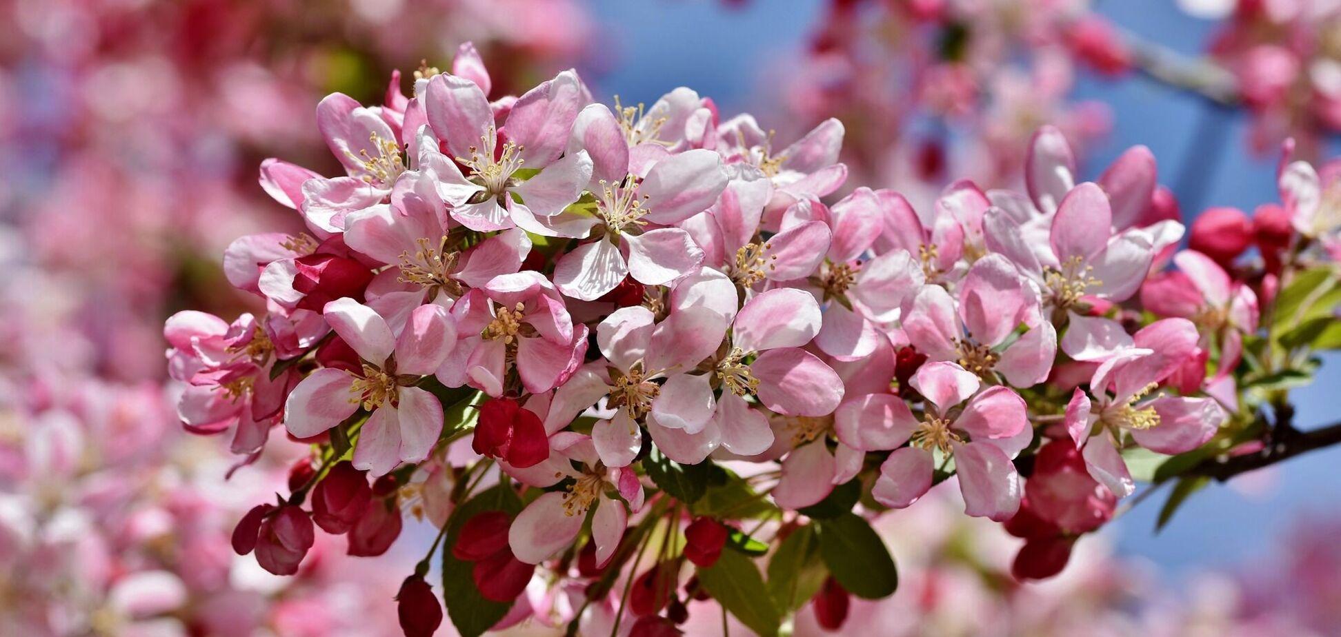 19 квітня: свято, прикмети і іменинники