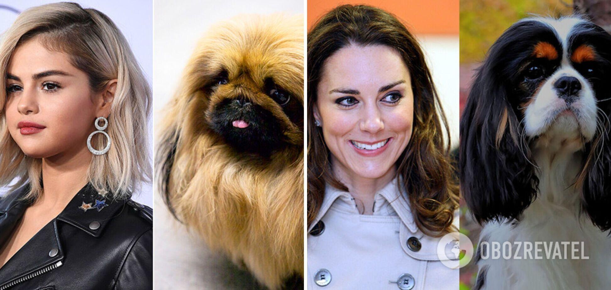 Селена Гомес має схожість з пекінесом, а Кейт Міддлтон з породою ши-тсу