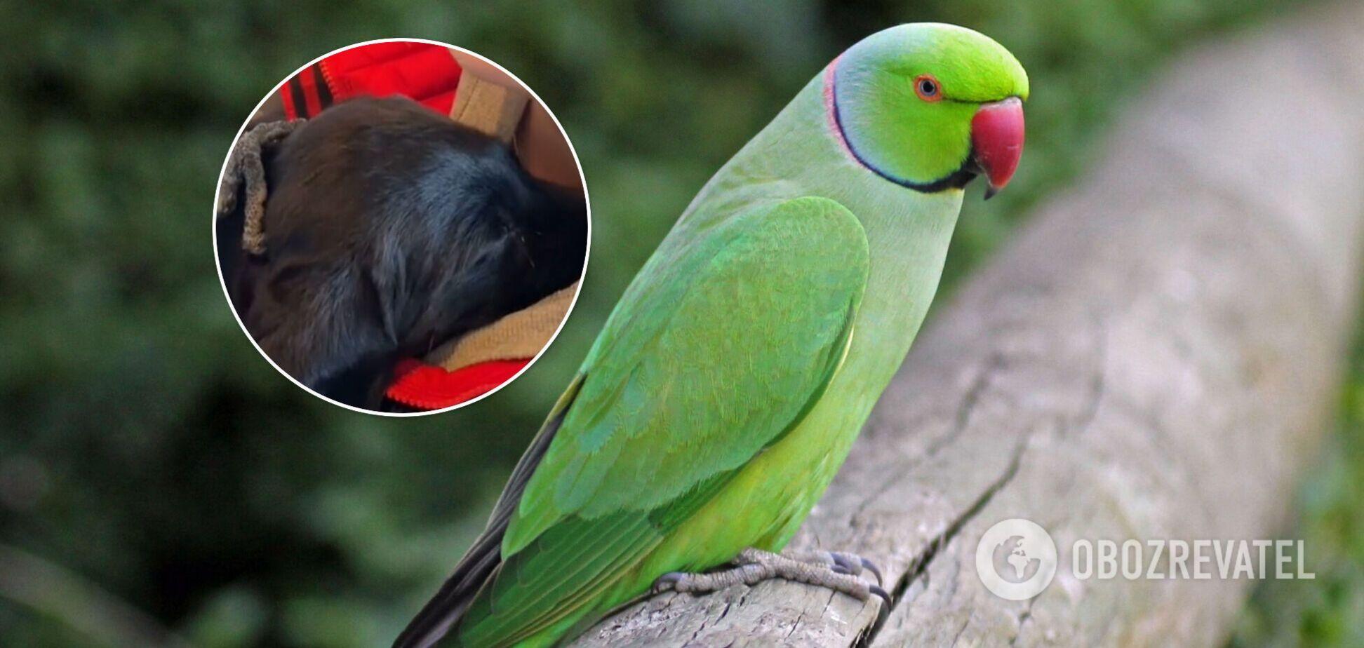 Папуга зізнався цуценяті в любові: момент потрапив на відео