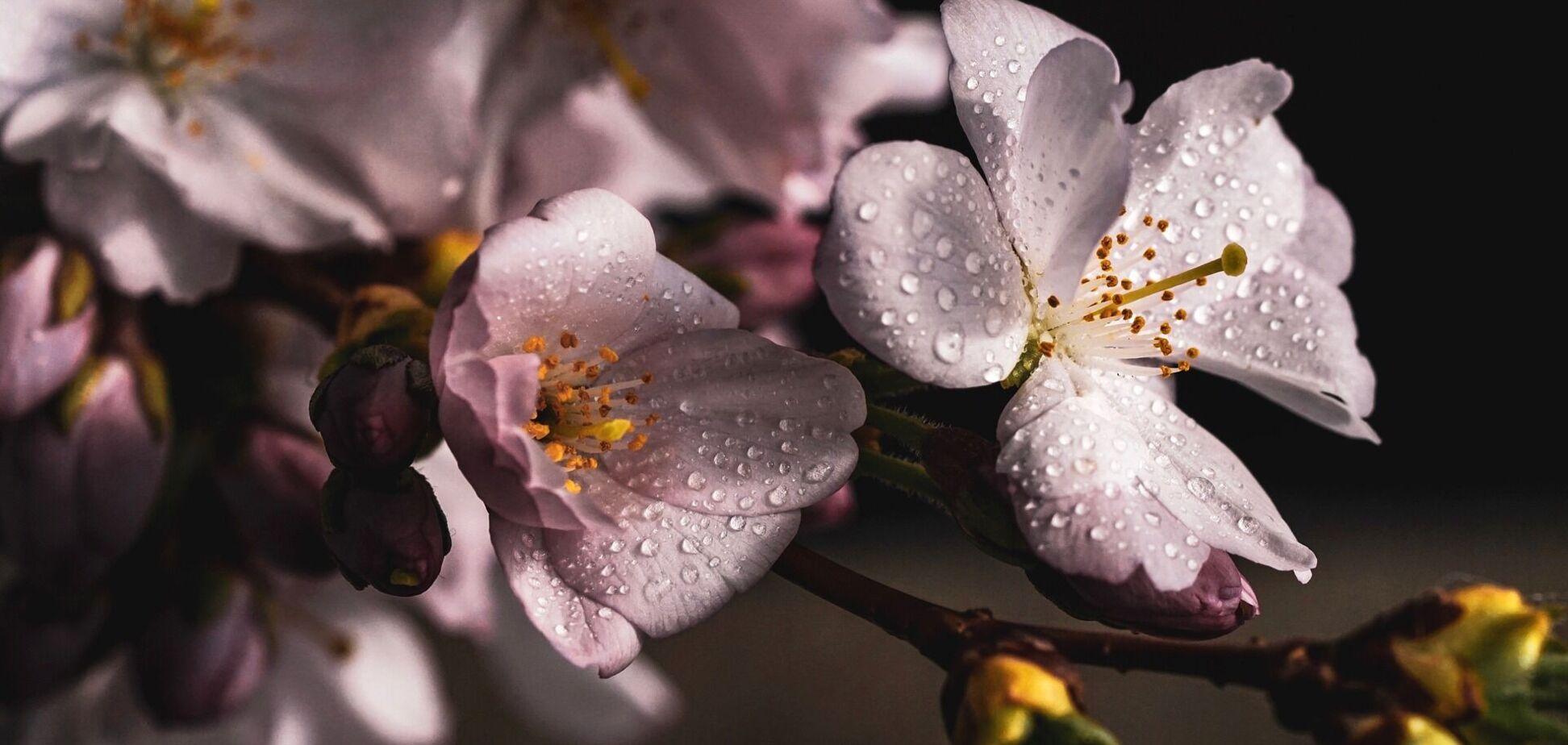 21 квітня: свято, що не можна робити, прикмети й іменинники