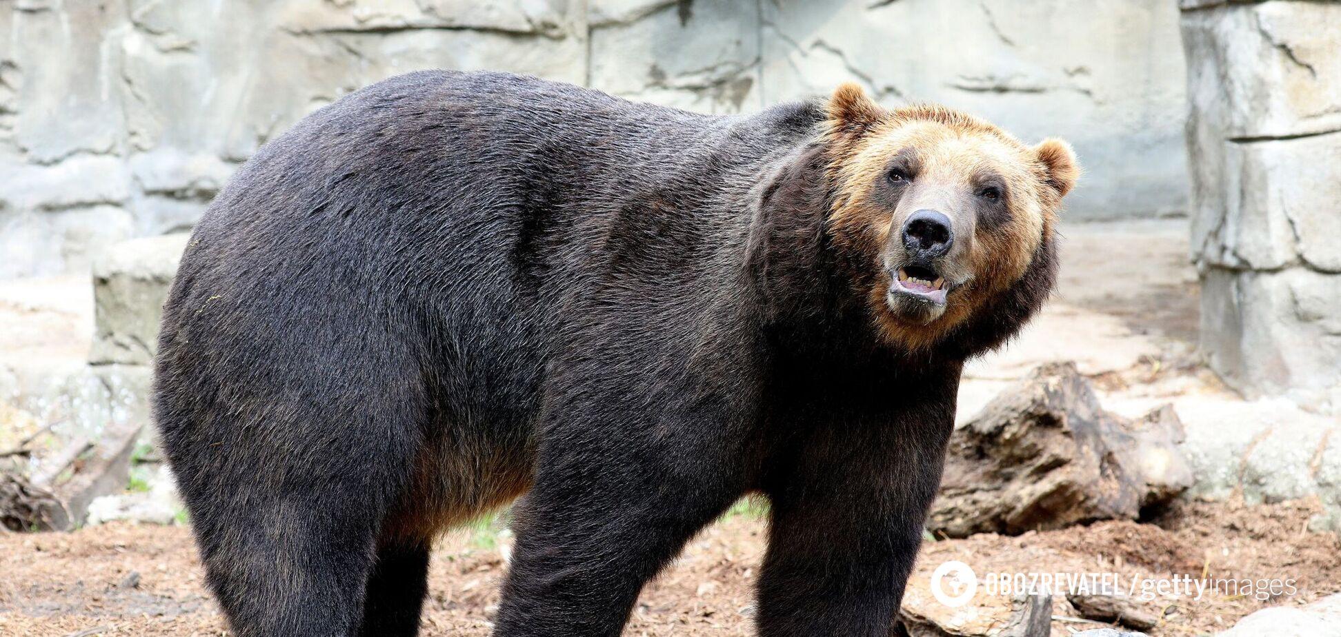 У США ведмідь гризлі вбив туриста