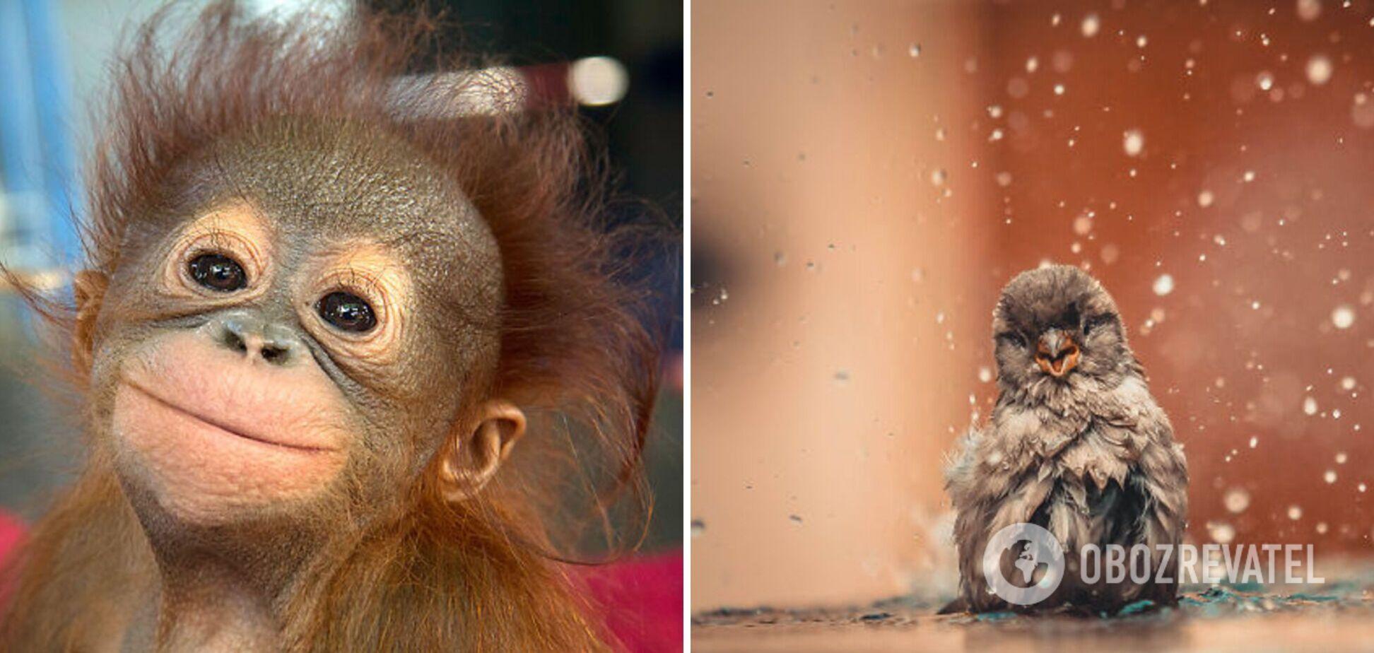 Тварини мило позують на камеру