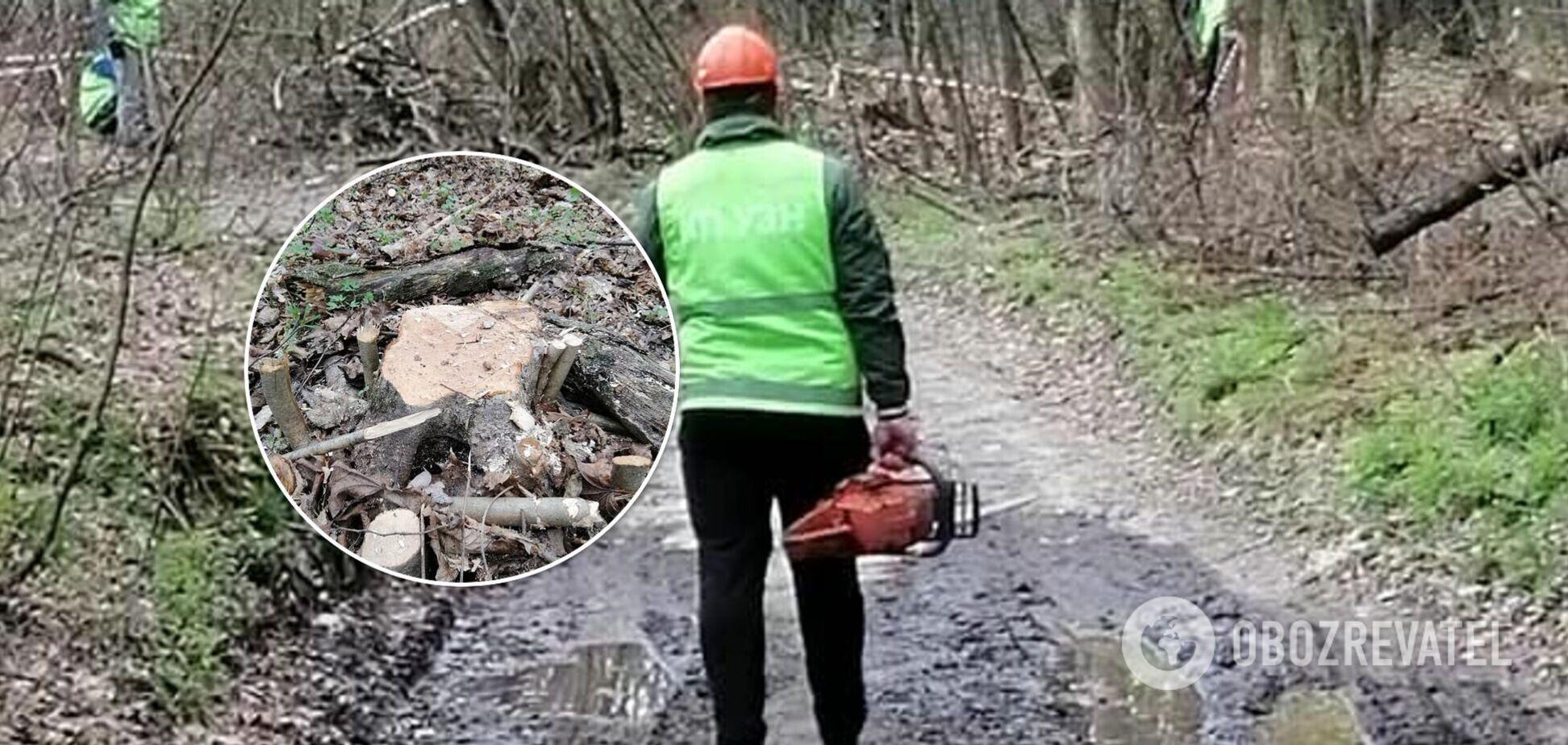 У Києві знищують частину Голосіївського парку