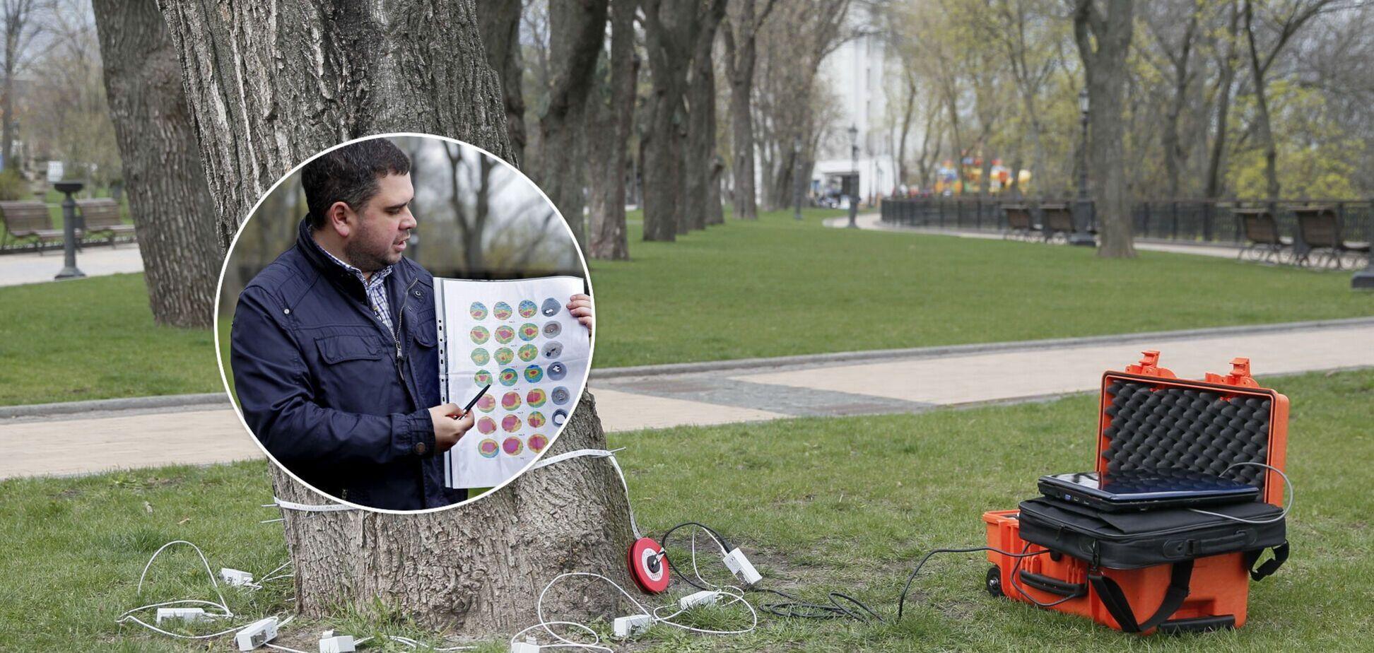 У Києві лікуватимуть дерева за допомогою спеціального томографа
