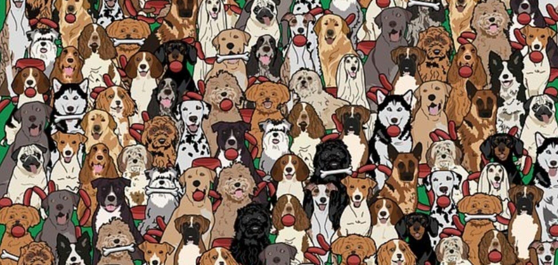 Найди собаку с колбасой: замысловатая головоломка сломала мозг пользователям сети
