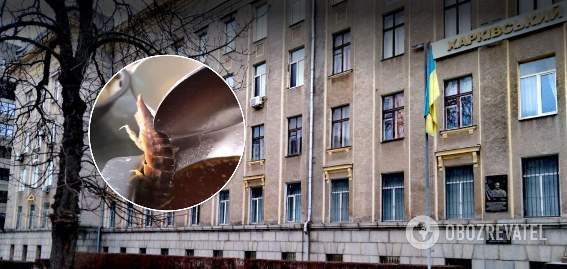 Курсанты Харьковского университета Воздушных сил нашли в борще огромное насекомое. Видео