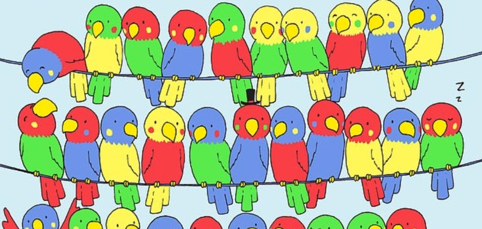 Знайди самотню папугу: в мережі спантеличені новою головоломкою