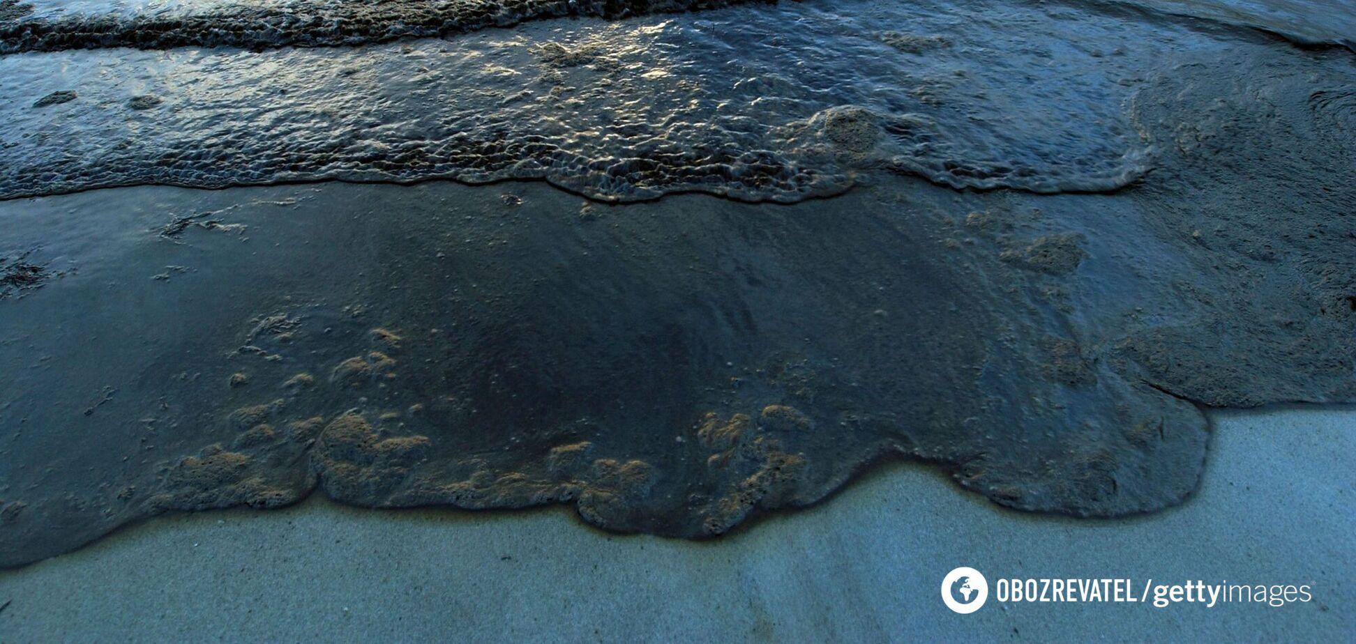 Біологи знайшли новий вид морських істот. Фото