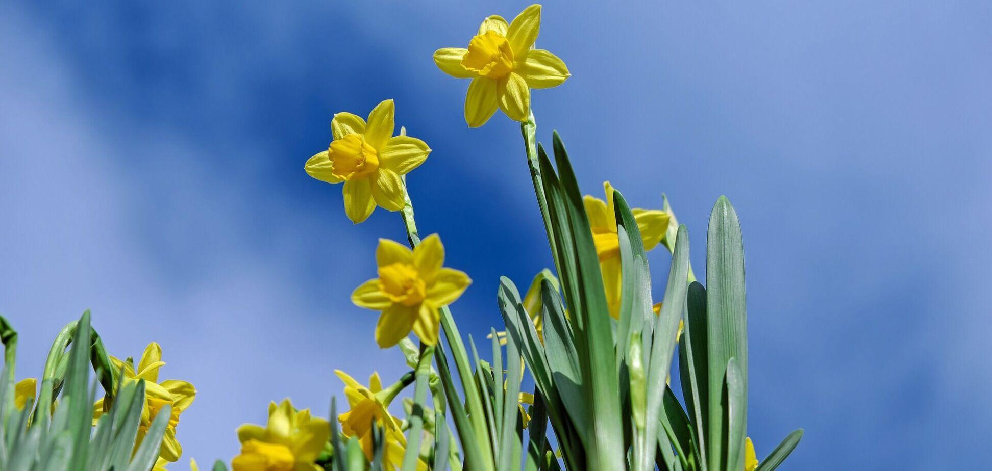 29 квітня: свята, що не можна робити в Чистий четвер і прикмети