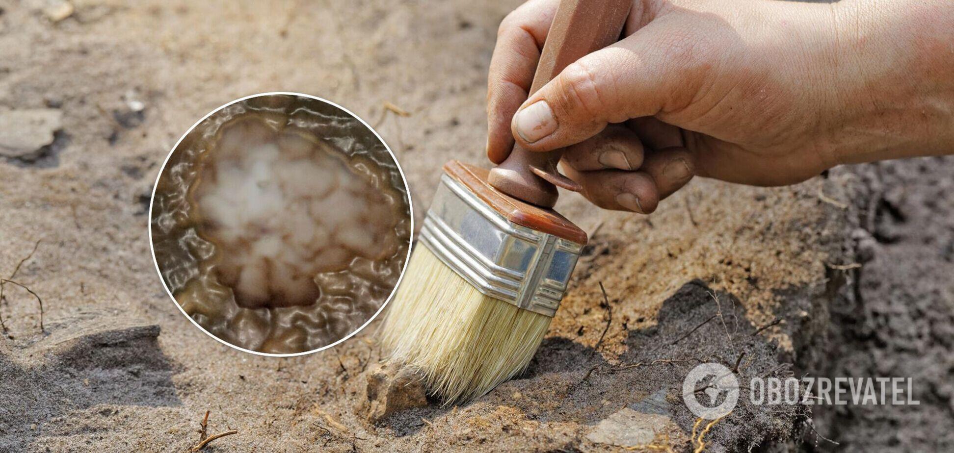 Скам'янілість віком в мільярд років поставила під сумнів теорію про зародження життя. Фото