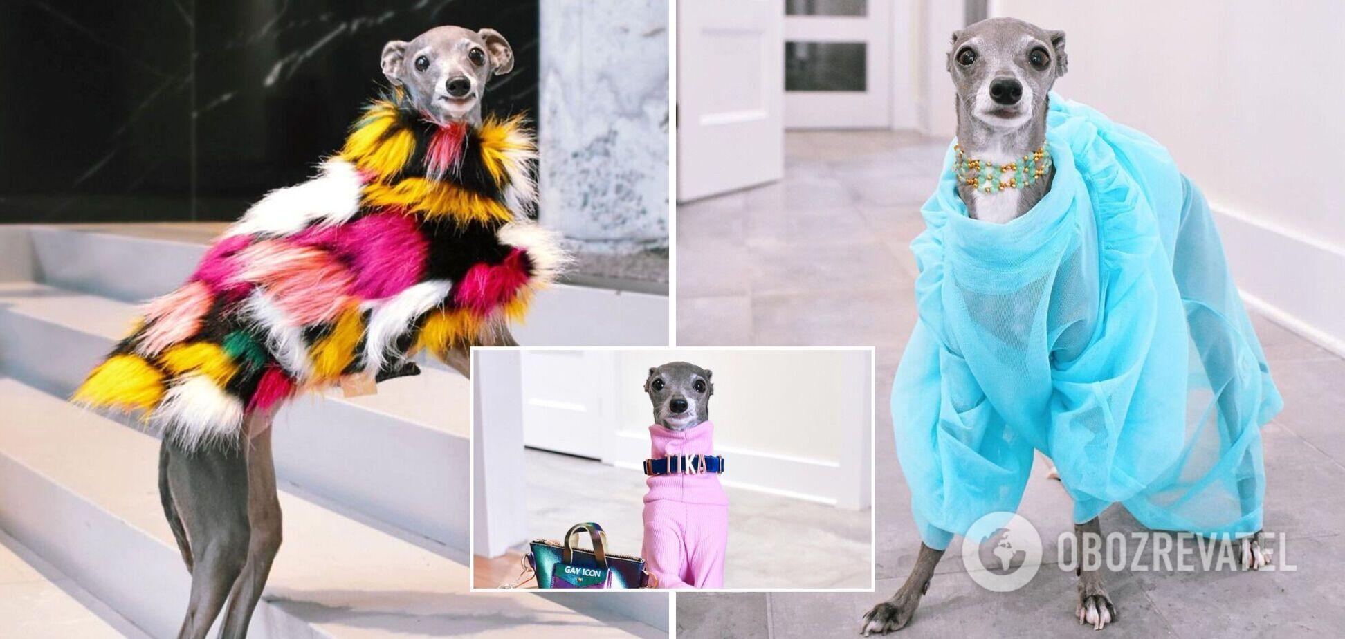 Собака стала зіркою Instagram