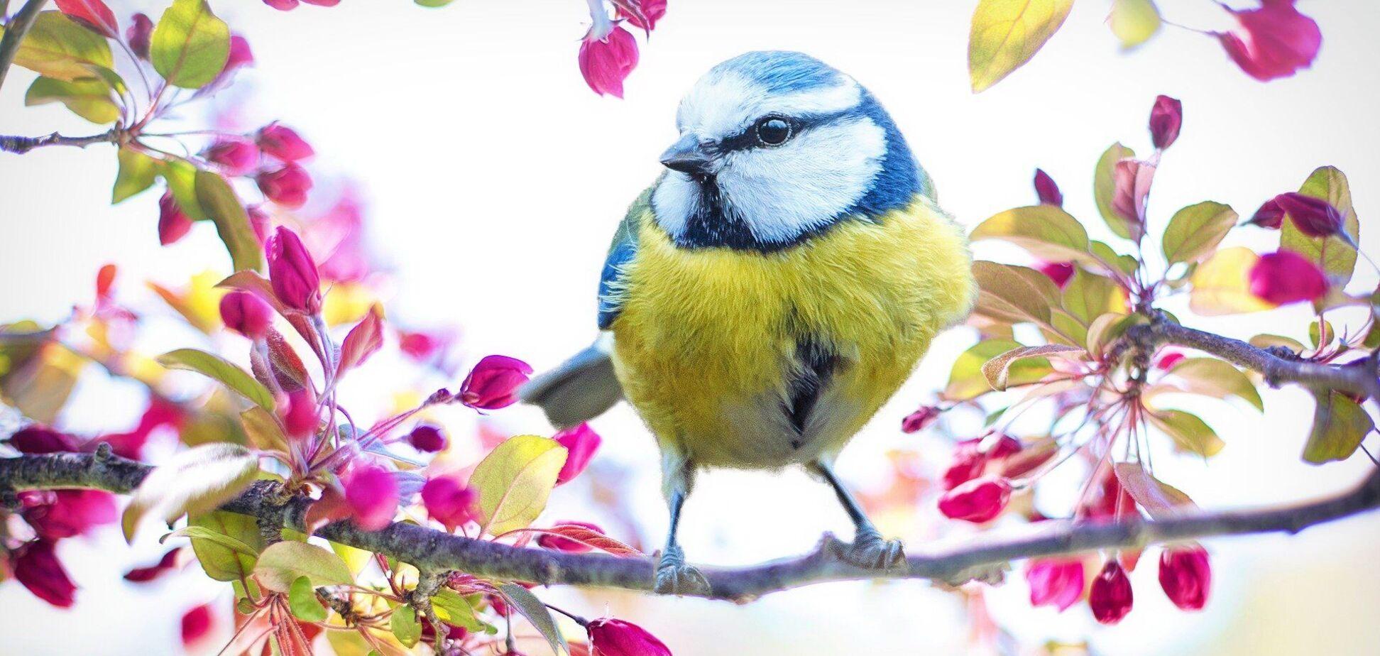 Птичка на весеннем дереве